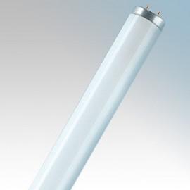 T8 Triphosphor Fluorescent Tubes